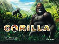 Игровой онлайн автомат Gorilla на деньги